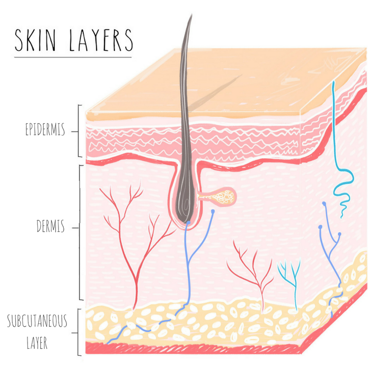 Layers Of Skin Gottayotti
