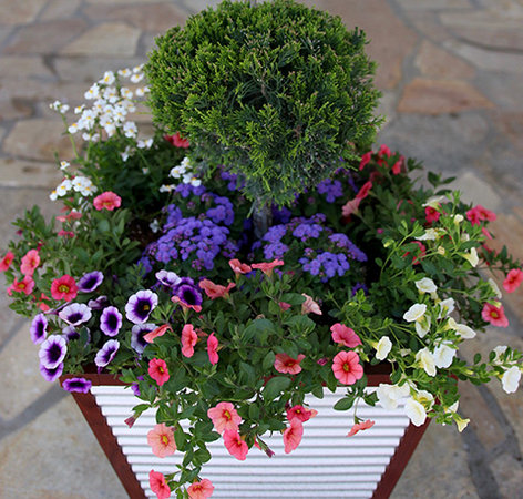 Gardener\u0027s Supply & How to Create Sensational Pots and Planters | Gardener\u0027s Supply