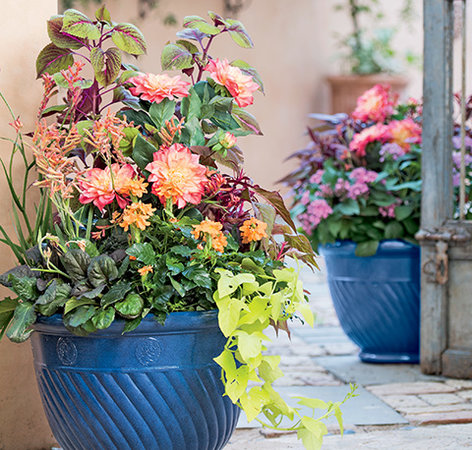 How To Create Sensational Pots And Planters Gardener S Supply